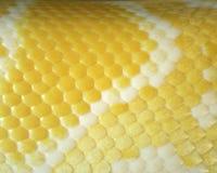 蟒蛇皮肤是金黄褐色。 库存照片