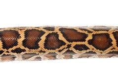 蟒蛇皮肤蛇 库存图片