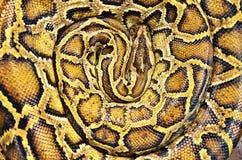 蟒蛇纹理皮肤。 库存图片