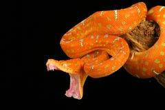 蟒蛇绿宝石结构树 免版税图库摄影