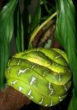 蟒蛇绿宝石 图库摄影