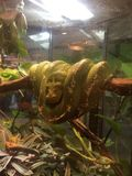 蟒蛇绿色结构树 免版税图库摄影