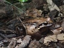 蟾蜍和青蛙 库存照片