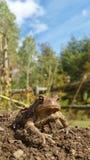 蟾蜍在庭院里 免版税库存图片