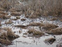 蟾蜍 在日出的湖 图库摄影