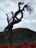 蠕动的树1 库存图片