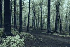蠕动的森林 图库摄影