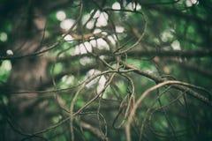 蠕动的神秘的不可思议的深森林 库存照片
