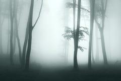 蠕动的足迹到雾里 免版税库存图片
