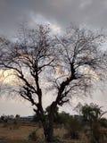 蠕动的结构树 免版税库存照片