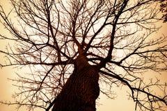 蠕动的贫瘠树 库存照片