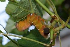 蠕虫在植物中 免版税库存图片