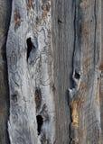 蠕虫木头1 库存图片