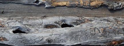 蠕虫木头2 免版税图库摄影
