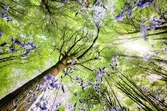 从蠕虫眼睛视图的会开蓝色钟形花的草 图库摄影