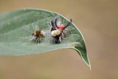 蠕虫,是共同的A爬行动物的图象在一片绿色叶子的 图库摄影