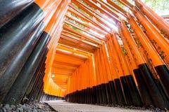 蠕虫Torii门眼睛视图在Fushimi Inari寺庙的 免版税库存图片