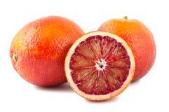 血液充分的半橙红二 库存照片