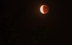 血液月亮四联体的逾越节  免版税库存图片