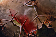 血液,刺,冰 免版税库存图片
