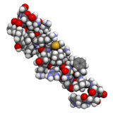 血管作用的小肠肽,化学结构 库存照片