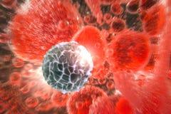 血细胞红色白色 库存照片