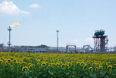 钻行业油西伯利亚适当的西部 油火炬和向日葵的领域 免版税库存图片