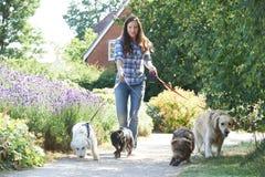 行使狗的专业狗步行者在公园 免版税图库摄影