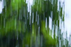 行动被弄脏的叶子摘要自然迷离绿色背景 免版税库存照片