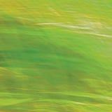 行动被弄脏的明亮的草地早熟禾背景,抽象绿色,黄色,琥珀色的水平的纹理样式拷贝空间 免版税库存图片