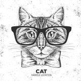 行家动物猫 手动物猫图画枪口  库存例证