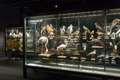 行星在Museu Blau的vida陈列 库存图片