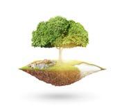 行星地球和树 库存照片
