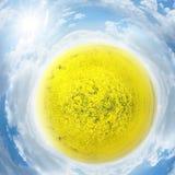 行星油菜籽 免版税库存图片