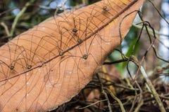 行程长的蜘蛛 免版税库存照片
