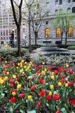 街市的郁金香花堆 库存照片
