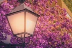 街灯和五颜六色的花 库存照片