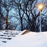 街灯和树在多雪的公园 免版税库存图片