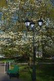 街灯和长凳在公园 免版税图库摄影