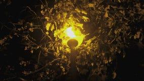 街灯在一棵树下在黑暗的晚上与黄灯特写镜头 股票录像