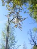 街灯在与蓝天的一根具体杆登上了 免版税库存图片