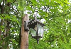 街灯在森林里 免版税库存照片