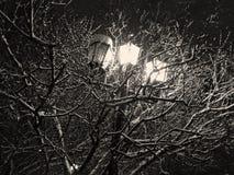 街灯照亮用雪盖的树 库存照片