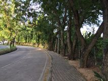 街道和树 免版税库存照片