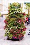 街道喇叭花花装饰在圣雷莫,意大利 免版税图库摄影