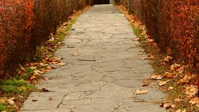 街道在秋天 库存图片