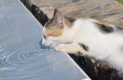 街道小猫饮用水 免版税图库摄影