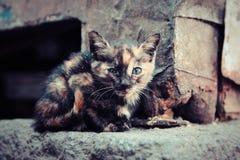 街道小猫 图库摄影