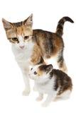 从街道抢救的母亲和小猫 免版税库存照片