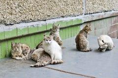 街道无家可归的猫由公司会集和参与他们的猫事物 免版税库存照片